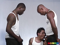 Gay Porn (Gay);Big Cocks (Gay);Interracial (Gay);Blacks on Boys (Gay);HD Gays;Amateur Guys;Black Guys;Mexican Black;Tattooed;Shared;Black Tattooed amateur...